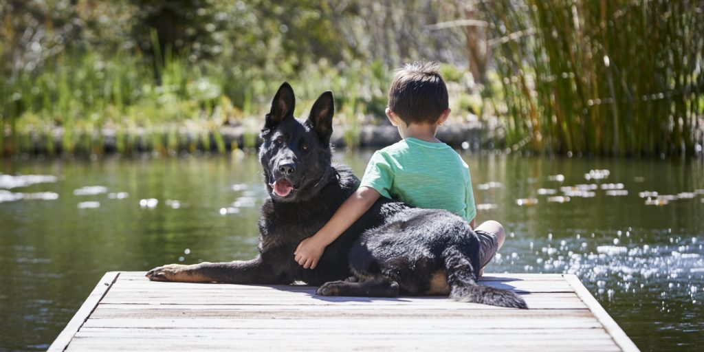 How to Select a Home Protection Dog