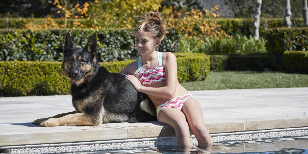 How to Select a Home Protection Dog - Temperament